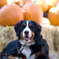 Jesse in the pumpkin patch